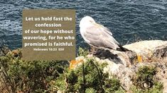 10 Bible verses about Hope in God - Inspirational scriptures Isaiah 61, Prayers For Hope, Hope In God, Bible Verses, Inspirational Scriptures, Spiritual Attack, O My Soul, Relationship Posts