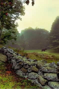 Fog on the Donwotn Abbey grounds gives everything a bit of mystery. | Watch on Masterpiece PBS #PadreMedium