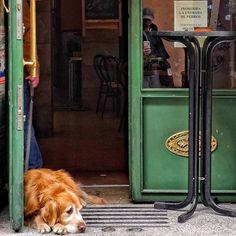 Resignación perruna... Prohibida la entrada de perros... #lavapies #places #lugares #people#gente #dogs #perros #madrid #urbanscenes #escenasurbanas #Color #colorgrafias #HuaweiP20Pro @huaweimobileesp