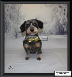 Lucy Small Breed, Little Dogs, Dog Grooming, Animals, Little Puppies, Animales, Animaux, Animal, Animais