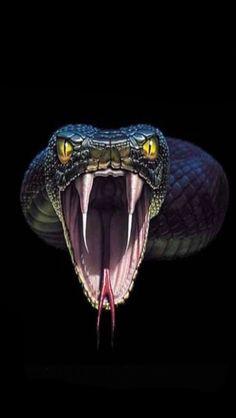 z brush snake Snake Drawing, Snake Art, Beautiful Snakes, Animals Beautiful, Rare Animals, Animals And Pets, Tatoo Snake, Desenho New School, Animal Tattoos