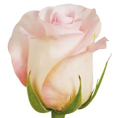 Roses, Sweet Akito (choose 50 or 100 stems) - Sam's Club Bulk Roses, 12 Roses, Wedding Colors, Wedding Flowers, Wedding Ideas, Wedding Bouquet, Wedding Inspiration, Blush Flowers, Rose Photos