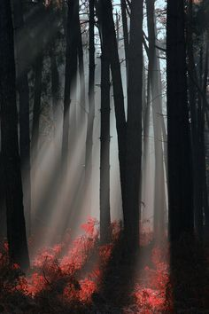 ✮ Foggy Woods
