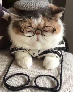 "11.9 k mentions J'aime, 219 commentaires - Krazymeows (@krazymeows) sur Instagram: ""illusionist cat ┏〇ﻌ〇┓ . Credit @_pizzicato_ Via @pleasantcats . . #krazycatoftheday . . #kat #cat…"""