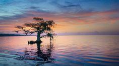 Скачать обои дерево, утро, синее кипарисовое озеро, Флорида, штат, США, раздел пейзажи в разрешении 1920x1080