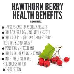 Colon Cleansing Remedies Hawthorn Berry is one of the ingredients in our SMT Colon Cleanse tea bags. Benefits Of Organic Food, Tea Benefits, Health Benefits, Colon Cleanse Detox, Natural Colon Cleanse, Cleanse Diet, Health And Nutrition, Health And Wellness, Health Tips