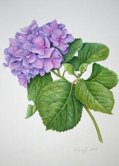 Margit Sampogna (b.1954) —  Hydranga, 2005 (645x900) Illustration Blume, Botanical Illustration, Botanical Flowers, Botanical Prints, Art Floral, Flower Prints, Flower Art, Watercolor Flowers, Watercolor Paintings
