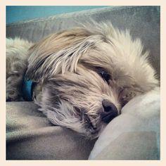 Sleeping (@jackiecous's photo)