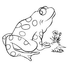 25 delightful frog coloring pages for your little ones - Frog Coloring