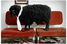 La oveja negra adoptada por Spainiscool by Sara Zorraquino #sheep #blacksheep #family #miriamarruga stylist #sarazorraquino photo #Spain #Barcelona #vanidad #fashion #tie #elegant #70´s