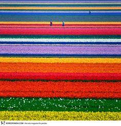 """O mundo é tão cheio de maravilhas que novos e surpreendentes lugares são descobertos a cada dia, seja por fotógrafos profissionais ou por amadores. Alguns locais são até difíceis de acreditar que realmente existem. De lagos cor de rosa a plantações de tulipas e canolas, de cânions e cavernas a cristais gigantes. São belezas produzidas...<br /><a class=""""more-link"""" ..."""