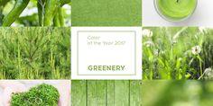 Greenery: Saiba mais sobre a cor de 2017