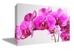 Hey, I found this really awesome Etsy listing at https://www.etsy.com/listing/240982021/phalaenopsis-2