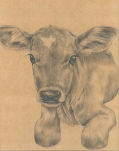 1000+ images about Art Drawings on Pinterest   Art Drawings, Pencil ... How To Draw A Realistic Cow