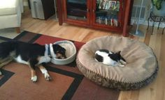 i stole the dog bed he did not notice i am so smart