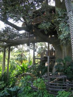 Swiss Robinson tree house
