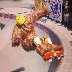 Wookie on a skateboard.