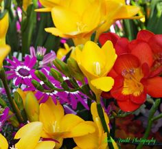 Shelia Arnold Photography Spring Flowers