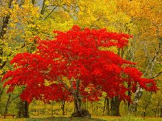such lovely autumnal colours                                                                                                                                                                                 More