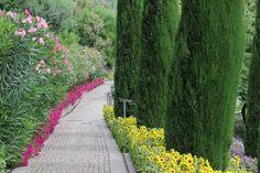 Durch mediterrane Landschaften spazieren: Oleander, Zypresen und Sonnenblumen   Passeggiare tra i paesaggi mediterranei: oleandro, cipressi e girasoli