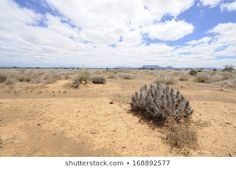 Karoo Landscape showing adaptive vegetation. The karoo is a vast semi desert region prone to drought. Once a prehistoric inland sea, it rich in fossils and has a unique adapted vegetation, Royalty Free Images, Royalty Free Stock Photos, Prehistoric, Fossils, South Africa, Landscapes, Country Roads, Sea, Unique