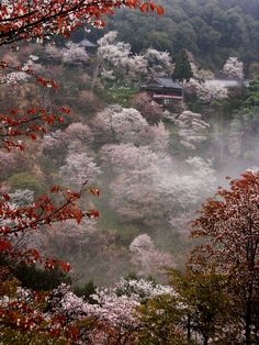 ethertune:    Yoshino misty temple (ByPaul Hillier Photography)