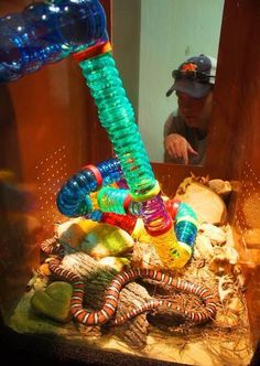 Rodent tunnels for snakes with surprise food enrichment hidden throughout! Photo by Rachel Lamkin.