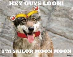 To learn more about Moon Moon check out my Moon Moon Board =)