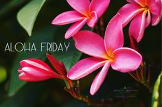 Take a look at our photo gallery and call to make a reservation today. King Kamehameha, Hawaii Outfits, Plumeria Flowers, Aloha Friday, Tahiti, Bora Bora, Family Is Everything, Fantasy Places, Vintage Postcards