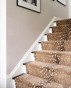Kind of obsessed with Stark Carpet's @starkcarpet antelope rug