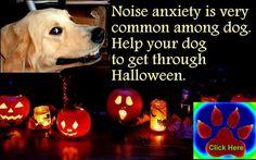 Help your dog to get through Halloween  http://www.bestdogfoodd.com/scared-dog-help/