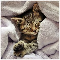 """""""Kittens are born with their eyes shut. They open them in about 6 days, take a look around, and then shut them again for the better part of their lives."""" --Stephen Baker"""