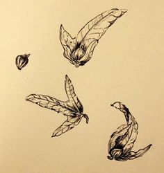 Sarah J. This year I chose the theme Nature's treasures and spent the month drawing seed pods, shells and other found pieces from nature's bounty. Seed Pods, Inktober, Drawing Ideas, Shells, Coloring, Artists, Autumn, Writing, Adventure