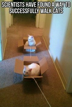 I might just try this. I will make a 4 cat train and off we go...
