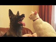 TRY NOT TO LAUGH OR GRIN - Funny Cat Fails Compilation 2016 - http://positivelifemagazine.com/try-not-to-laugh-or-grin-funny-cat-fails-compilation-2016-20/ http://img.youtube.com/vi/rbqLrxRHbUg/0.jpg  Funny cats compilation 2016 Best funny cat videos ever by Funny Vines.Hope you like a new funny cat videos compilation 2016.These funny cats and silly cats … ***Get your free domain and free site builder*** Click to Surprise me! Please follow and like us:  var addthis