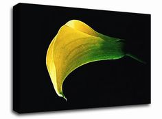 Stunning Night Lily floral canvas from only £19.99 at Infusion Art http://www.infusionart.co.uk/products/Stunning-Night-Lily-251241.aspx