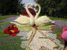 Topiary Swans #swan #cigno #cigne #flower - Carefully selected by GORGONIA www.gorgonia.it