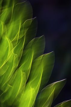 Abstract Impressionist photo of decorative plant