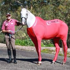 So exactly what was Hay List wearing? It was a compression and recovery suit, which will be officially launched in June this year by Australian company, Hidez, who are based in Sydney. It's the latest in cutting-edge technology designed to help horses recover from travel and strenuous exercise by using a 'graduated compression technology' system which enhances circulation and supplies more oxygen to muscle groups. The suit helps reduce vibration during travel, and aids blood flow which in tur...