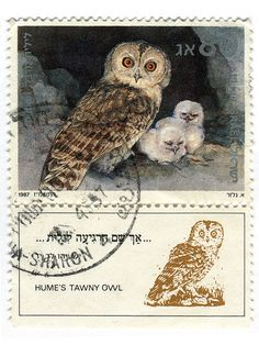 Israel Postage Stamp: Hume's Tawny Owl by karen horton, via Flickr