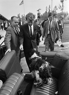 Freckles Greets His Master. Robert F. Kennedy and the suited crowd, 1968.