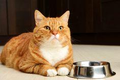 5 Symptoms of Feline Hyperthyroidism
