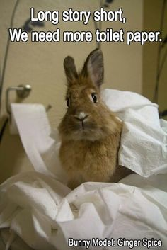 Omg my bunny did this once 😂 but my bunny actually shredded the paper Binky, Bunny Rabbits, Dwarf Bunnies, Baby Bunnies, Cute Bunny, Funny Bunnies, Bunny Pics, Bunny Images, Funny Animal Pictures