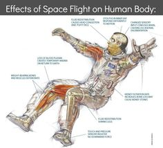 """Loss of Gravity and Other Terrible Things: How Does the Human Body Act in Space?  You've probably been told many, many times that everything in the cosmos is connected. As John Muir so eloquently put it, """"When we try to pick out anything by itself, we find it hitched to everything else in the Universe."""" But what does this mean, exactly? Today, I want to explore this statement by looking at how we are connected to our planet.  We obviously need the Earth for food, wa"""