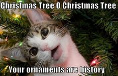 """This is what happens when cats write Christmas carols. Check out my cats' version of """"The Twelve Days of Christmas."""""""