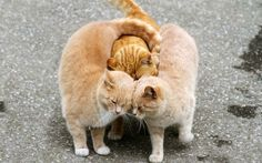 Funny cats: Funny #Cats New Compilation