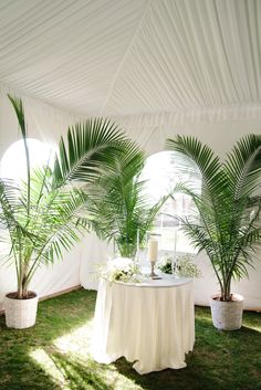 Large Fern Plants in White Pots   Photo: By Millie B Photography  