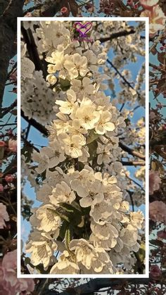 Enjoy this time of year so much! I love to share the beautiful nature video with you guys Wallpaper Nature Flowers, Flower Phone Wallpaper, Beautiful Nature Wallpaper, Flowers Nature, Spring Flowers, Beautiful Nature Scenes, Beautiful Flowers, Golden Temple Wallpaper, Clock Wallpaper
