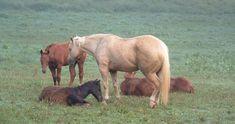 Horses - eXtension