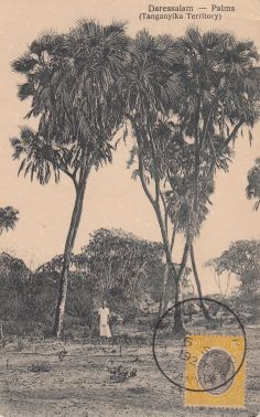 Palm Trees Tanganyika 1920s
